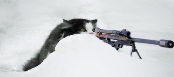 snipercat.jpg