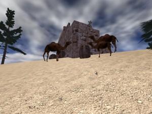 Visions-Camels-2007-03-13